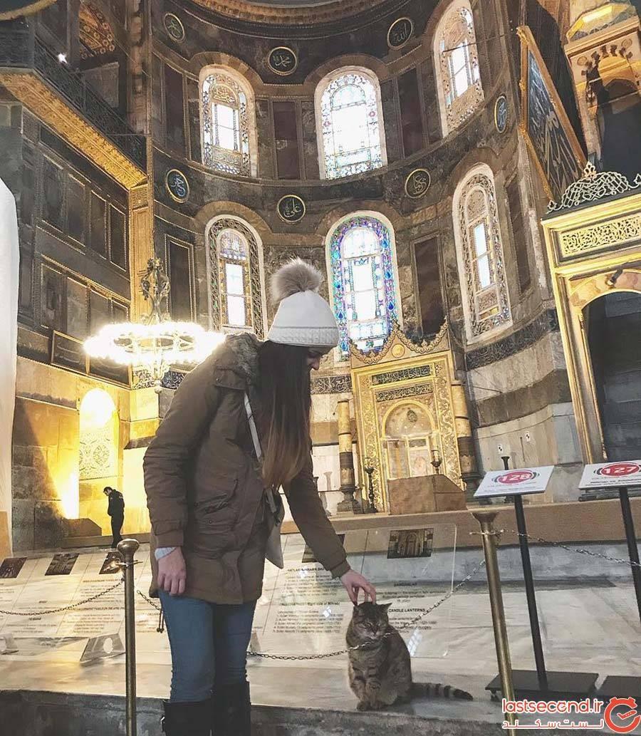 گربهای که چهارده سال است در مسجد ایا صوفیه زندگی میکند