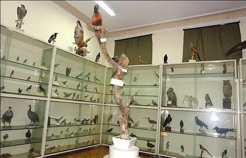 موزه-جانور-شناسی-17572-همگردی.jpg