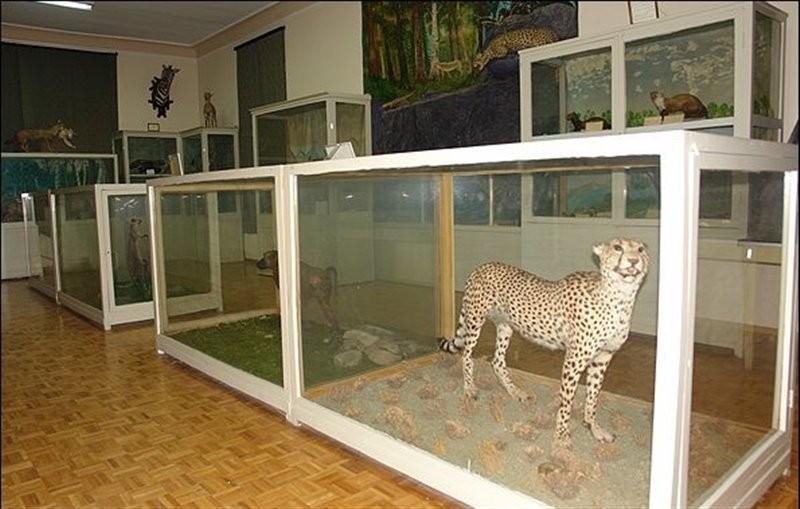 موزه-جانور-شناسی-17573-همگردی.jpg