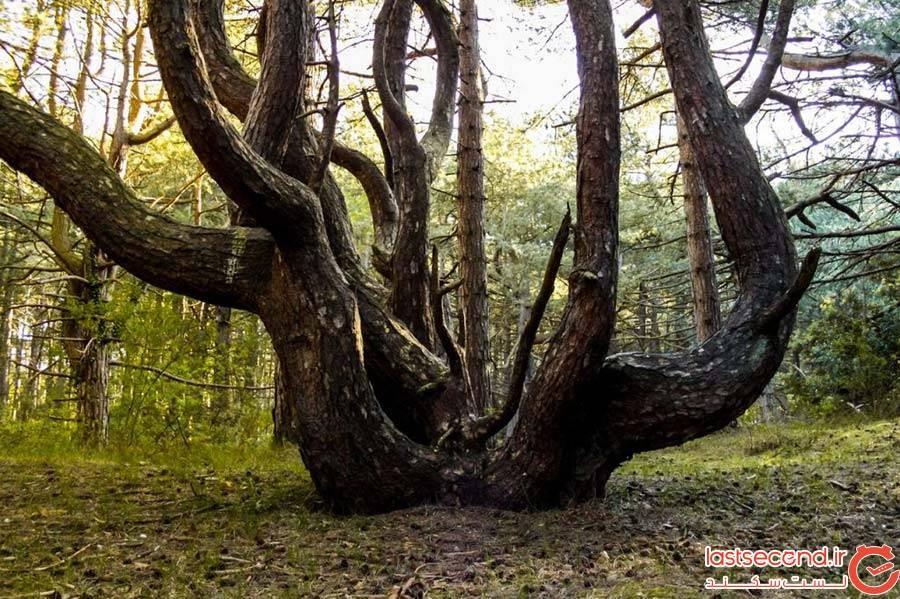 جنگل هویا-باچو؛ رومانی