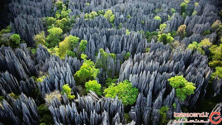 جنگل سینجی؛ ماداگاسکار