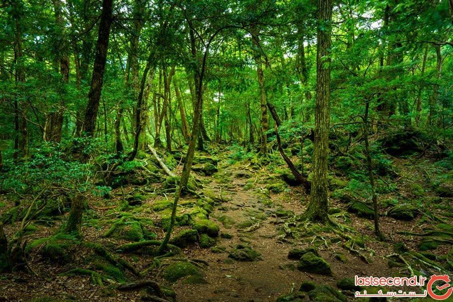 جنگل آئوکیگاهارا؛ ژاپن