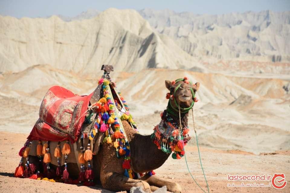 شتر و کوه های مریخی