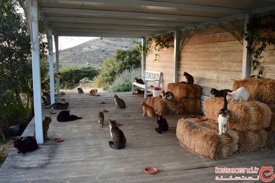 گربه های یونان