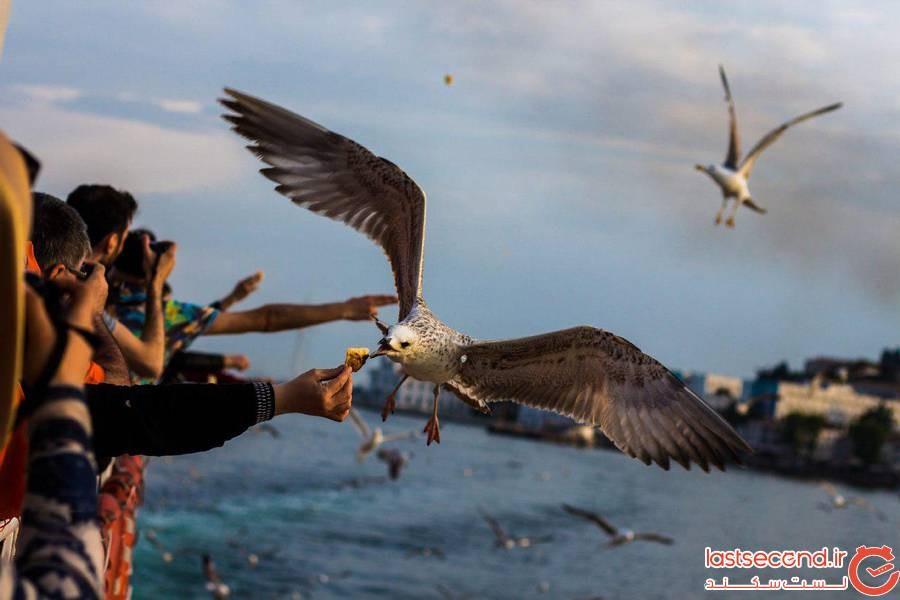 مرغان دریایی در استانبول