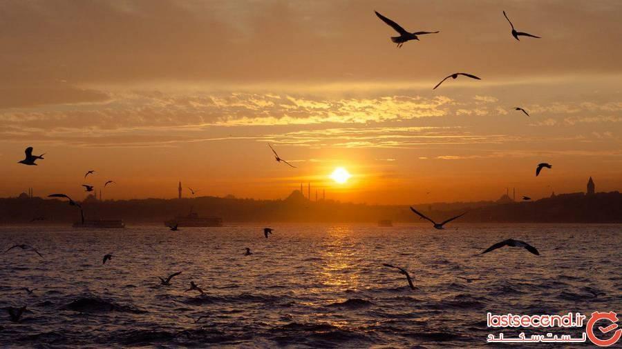 مرغ دریایی استانبول