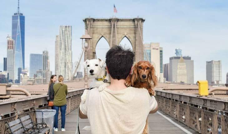 مشهورترین سگ های جهانگرد دنیا
