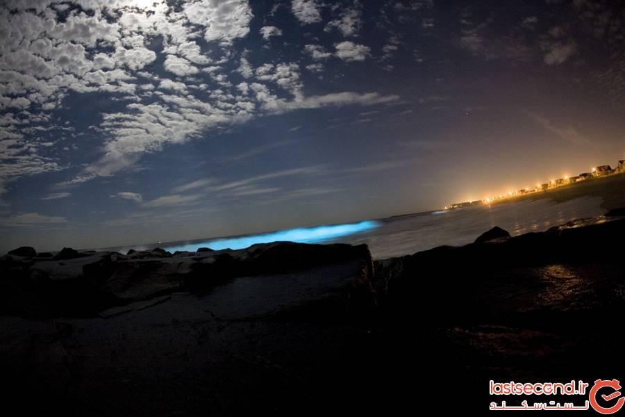 زیست تابی در ساحل فلوریدا