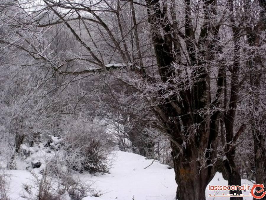 جنگل الیمستان آمل