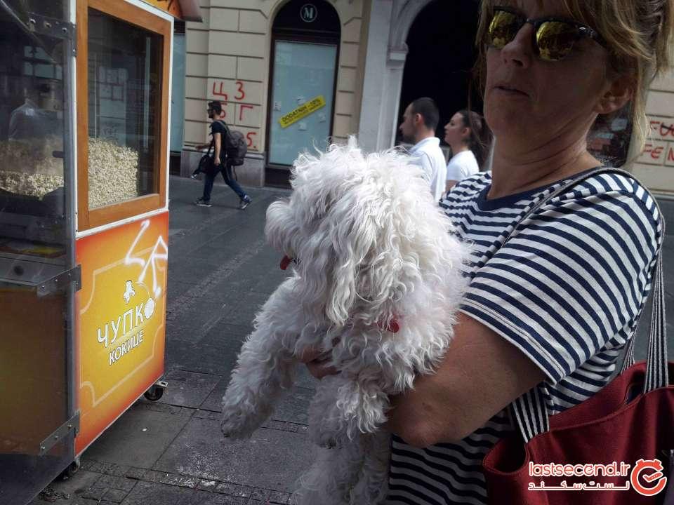 علاقه شدید مردم صربستان به سگهای خانگی