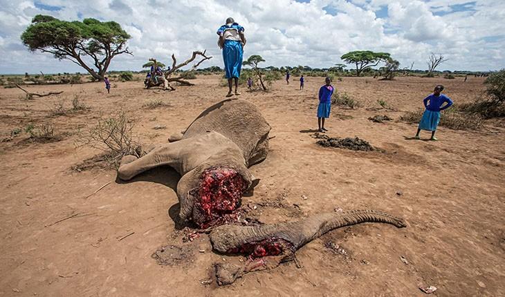 سم تهدیدی برای حیات وحش آفریقا