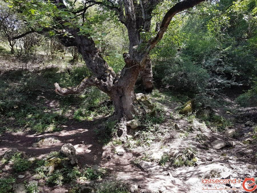 جنگل رویایی الیمستان در آمل