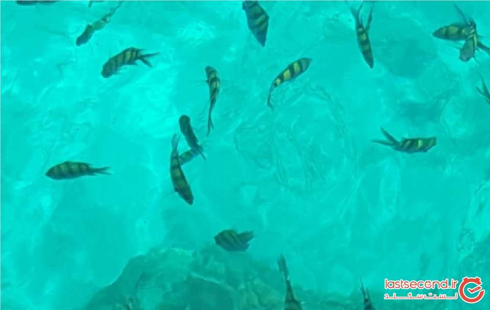 ماهی.jpg