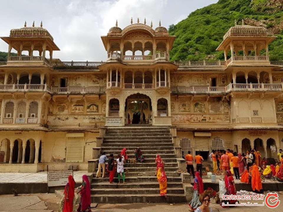معبد میمون ها در هند