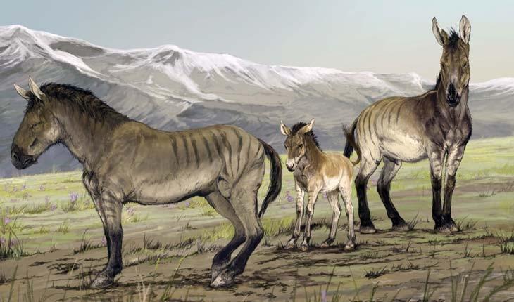 بقایای اسبی از عصر یخبندان در حیاط خانهای کشف شد!
