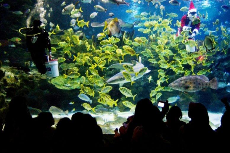 Aquaria KLCC (1).jpg