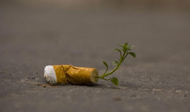 سیگارهایی که تبدیل به درخت خواهند شد