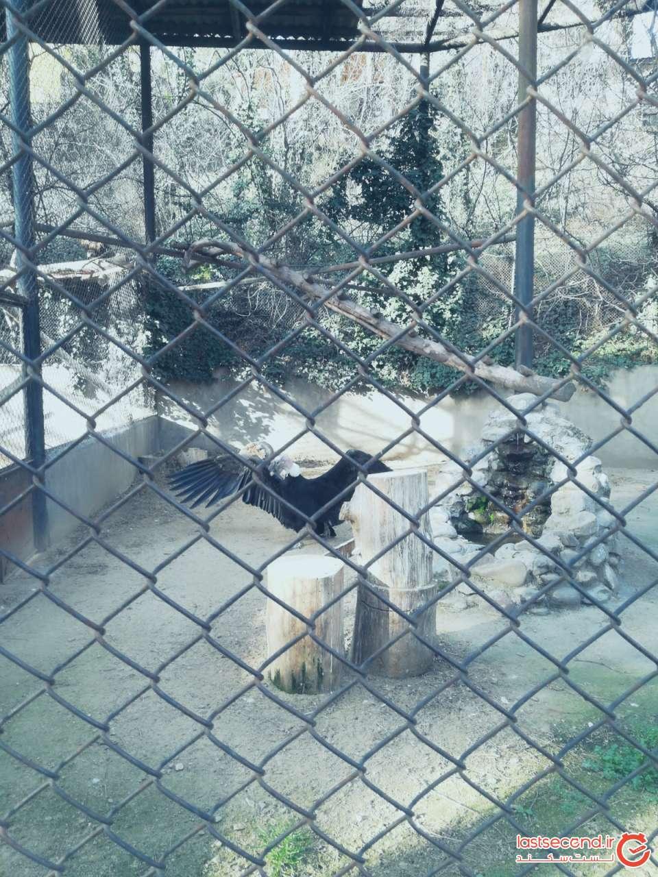 برخی حیوانات باغ وحش تفلیس  (3).jpg