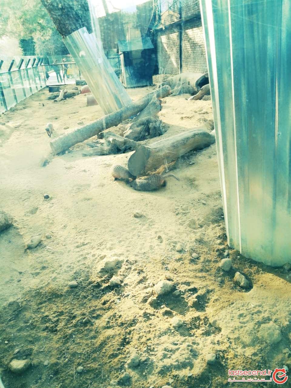 برخی حیوانات باغ وحش تفلیس  (2).jpg