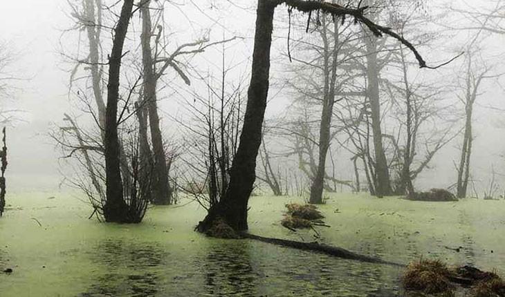مرداب دیوک، پدیده وهم برانگیز جنگل کلاردشت