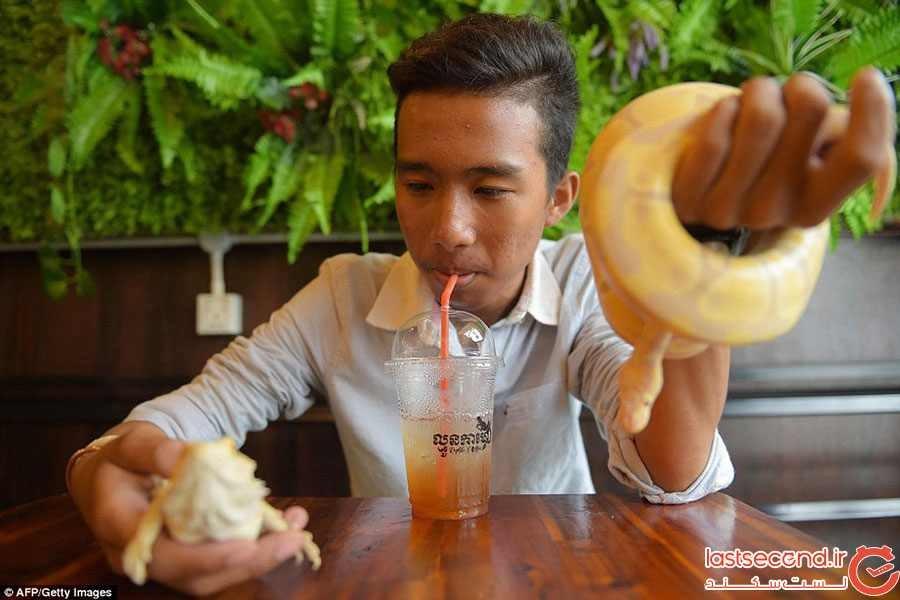 کافه خزندگان کامبوج با استقبال مواجه شد
