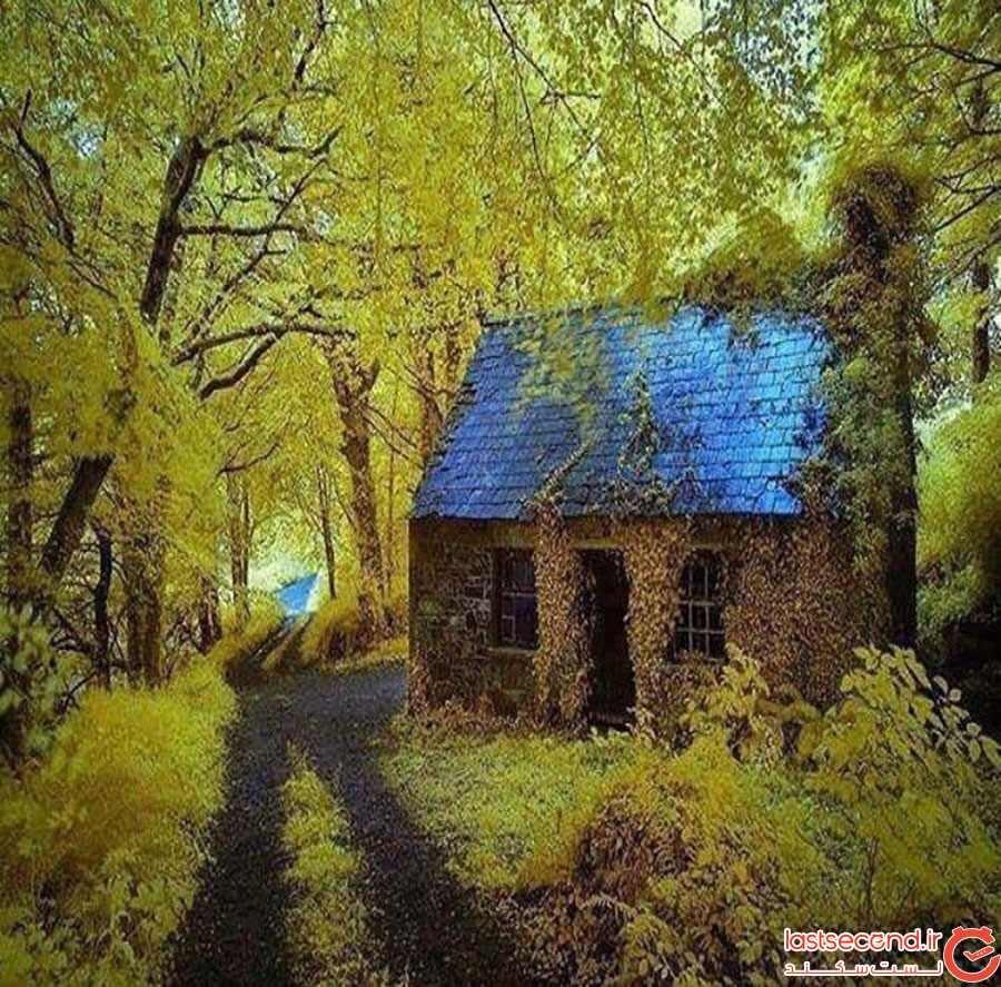 کلبه رها شده در میان جنگل؛ ایرلند