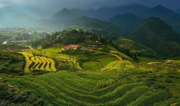 چای دارجلینگ، اکسیری با مشتریان اروپایی و آمریکایی