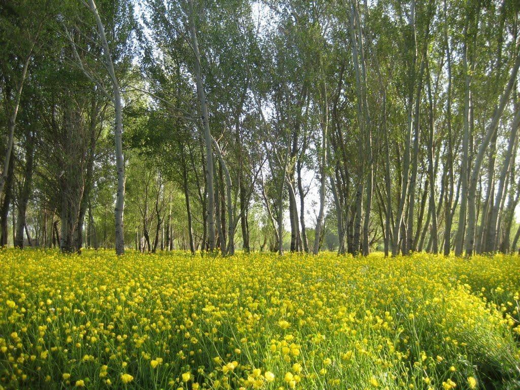 روستای اسبفروشان