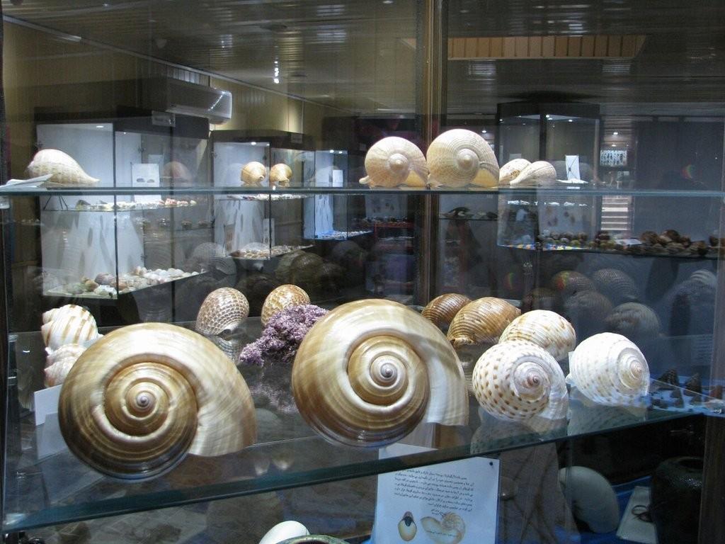 Isfahan Seashell Museum (7).jpg