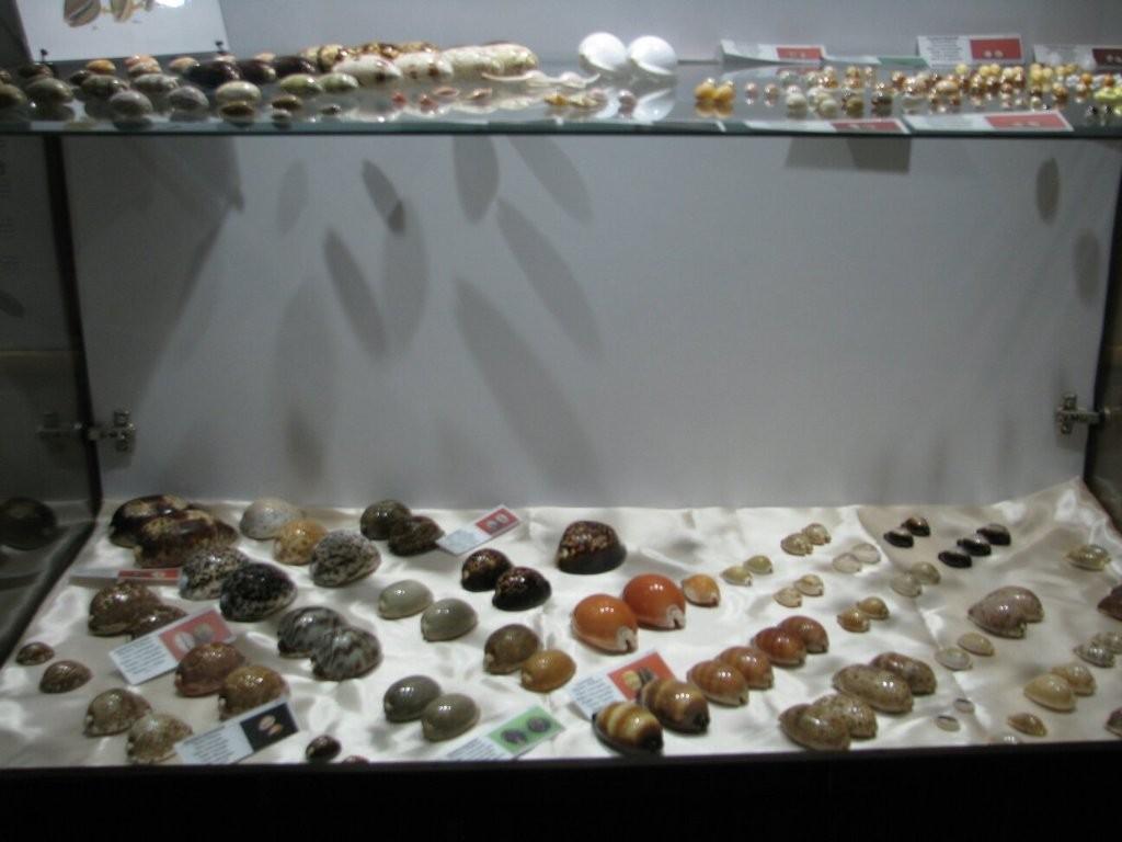 Isfahan Seashell Museum (4).jpg