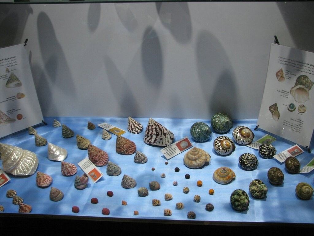 Isfahan Seashell Museum (11).jpg