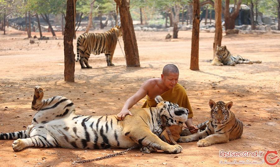 آزار حیوانات در تایلند