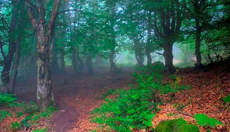 جنگل ارفع ده، سرزمین درختان بهم تنیده مازندران