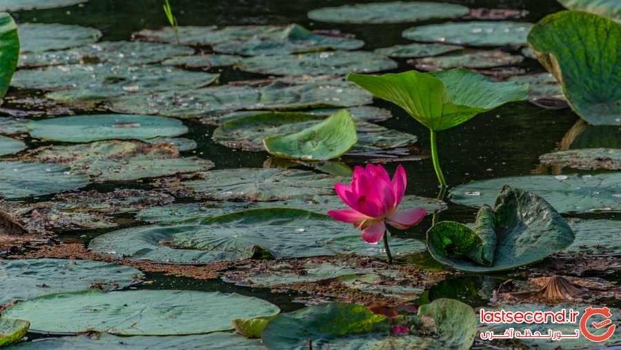 Soostan Lagoon (1).jpeg