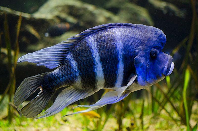 Isfahan Aquarium-01.jpg
