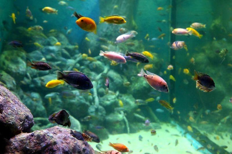 Isfahan Aquarium-11.jpg