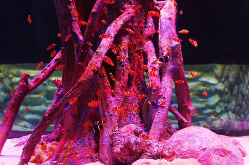 Isfahan Aquarium-07.jpg