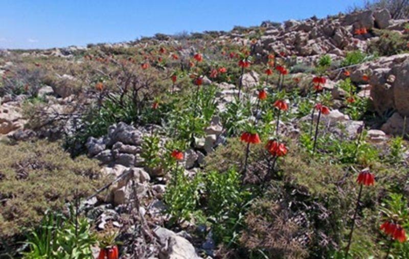 Salan Mountain (4).jpg