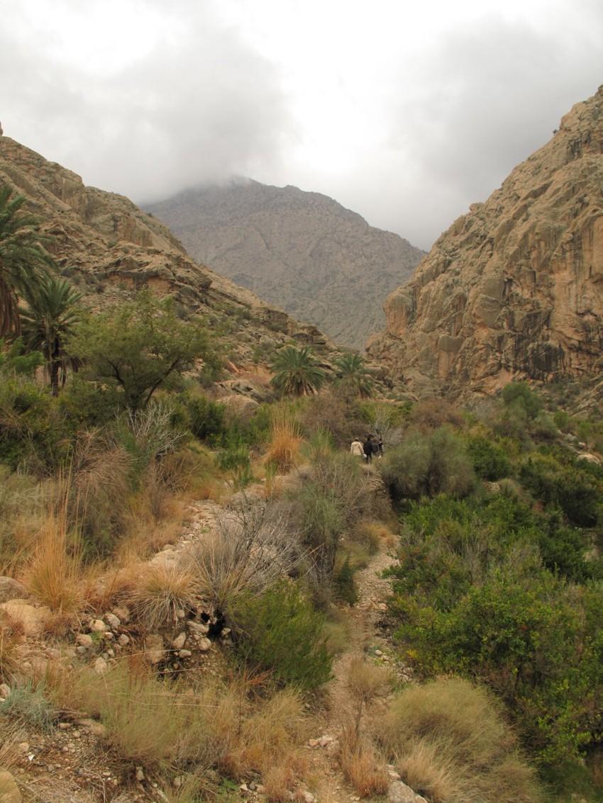 کوه گنو
