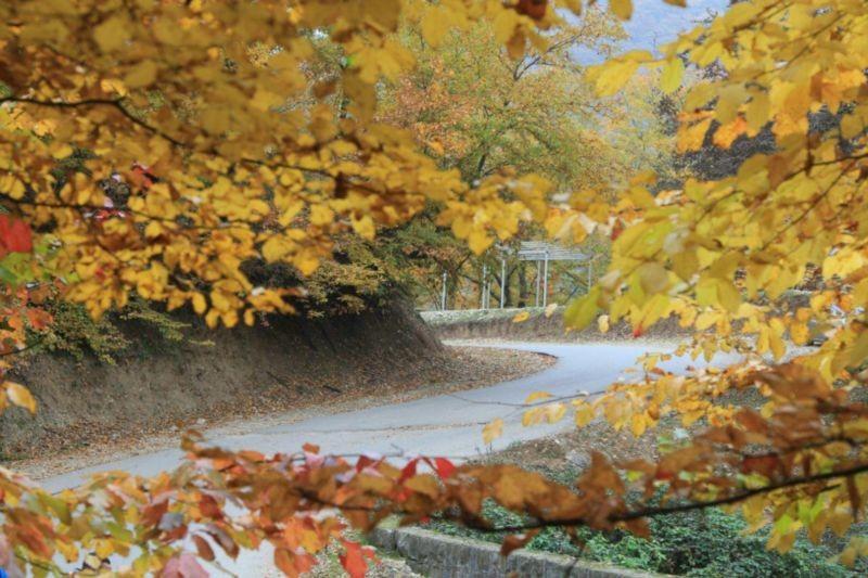 جنگل بلیران