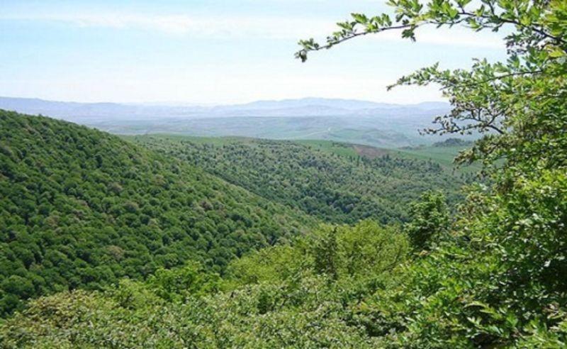 Dasht-E Shad Forest