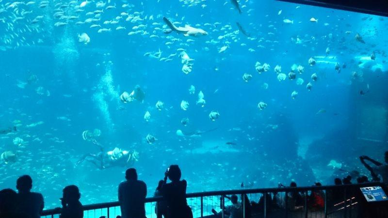 S.E.A. Aquarium (2).jpg