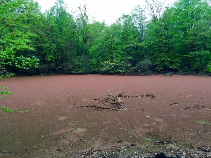 Hasal Swamp (1).jpg