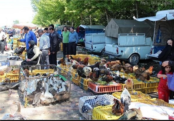 بازار محلی بابل (چاله)