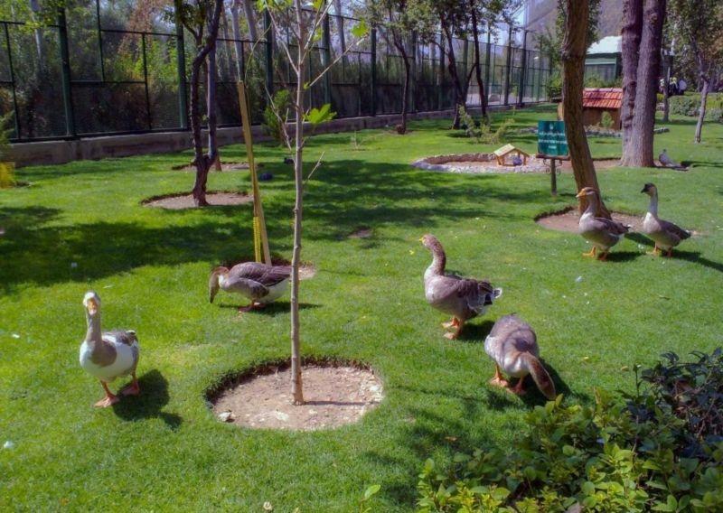 باغ پرندگان (اصفهان)
