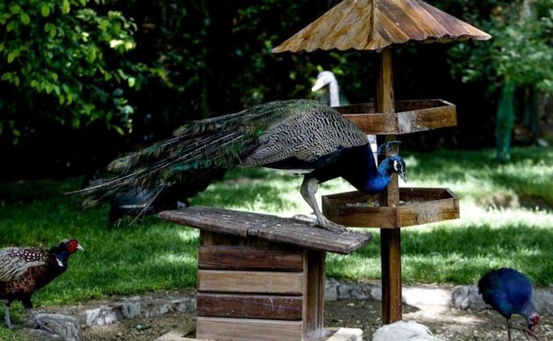 Birds Garden (2).jpg
