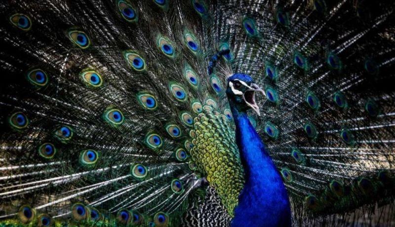 Birds Garden (6).jpg