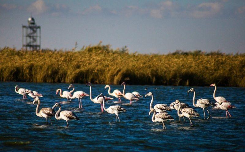 Meighan Wetland (2).jpg
