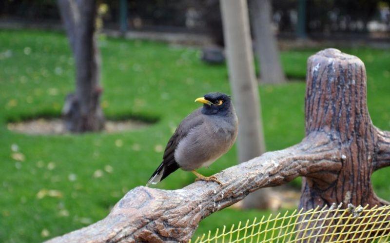 Birds Garden (3).jpg