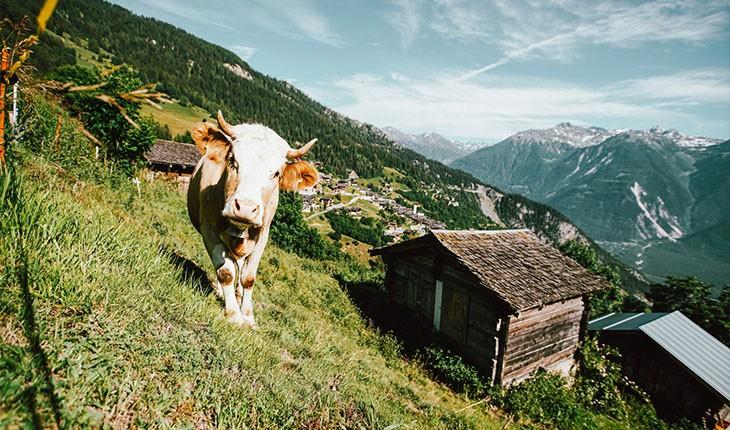 برای اقامت در روستای آلبینن سوئیس، 60 هزار یورو دریافت کنید!